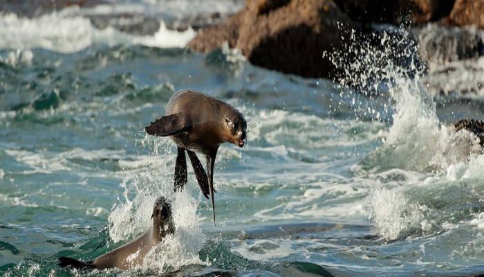 seals_cape_town_travel