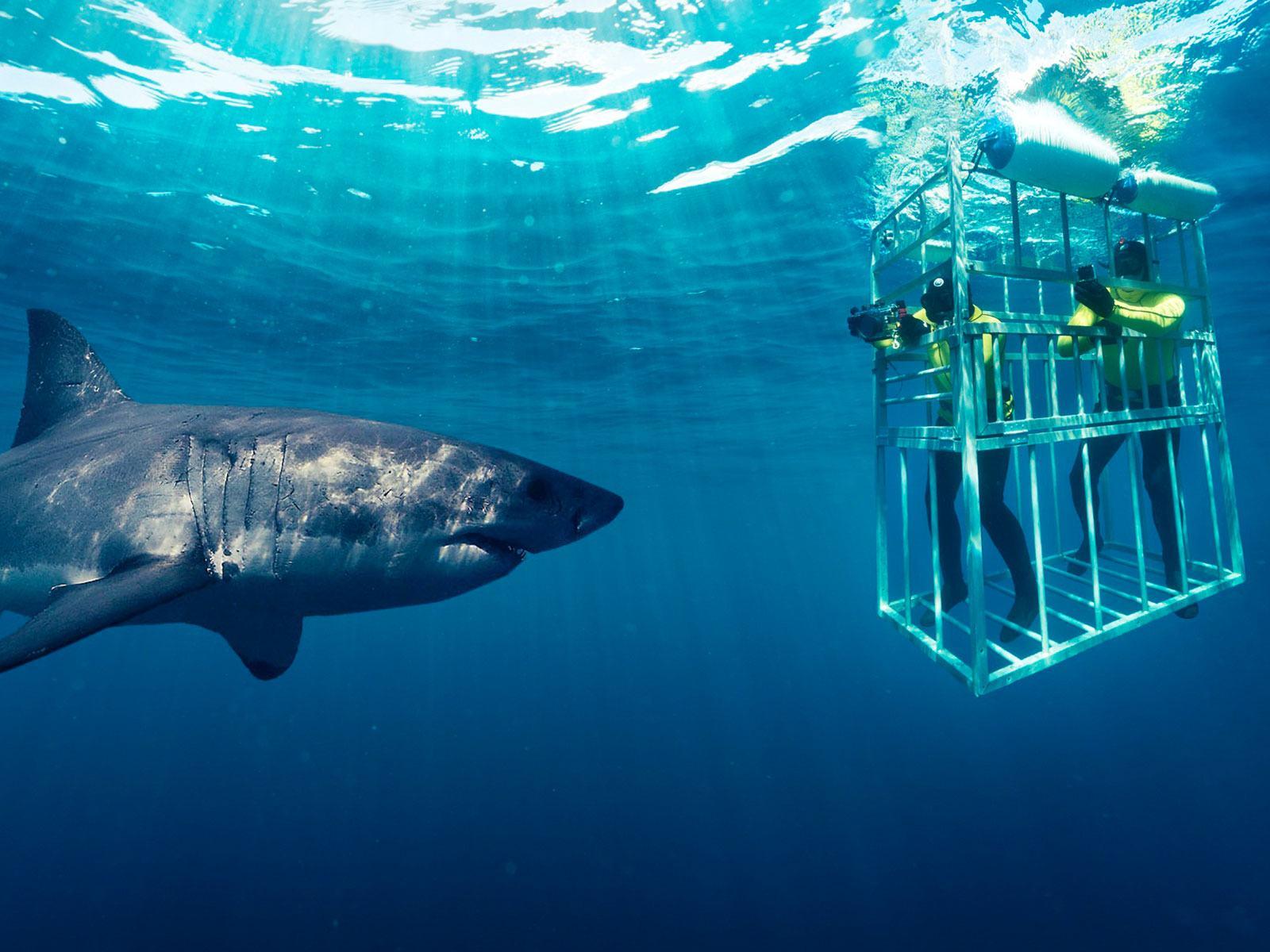 https://www.pureafricaexperiences.com/destinations/shark-cage-diving/