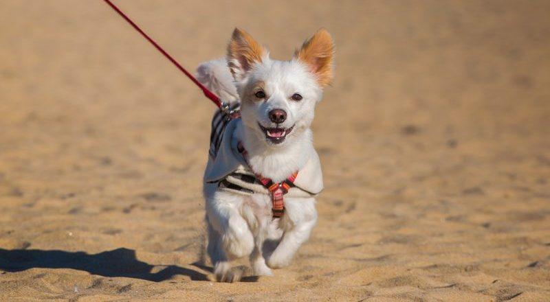 happy-dog-on-holiday