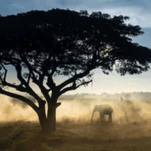 elephants under baobab tree