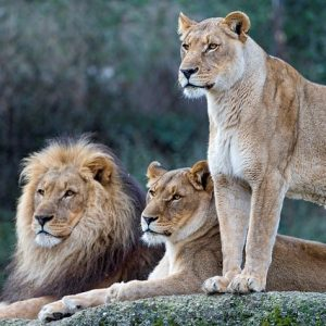 kruger-park-tour-from-nelspruit