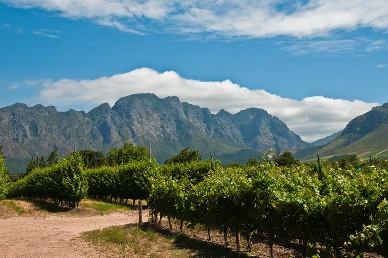 vinyard Franschhoek