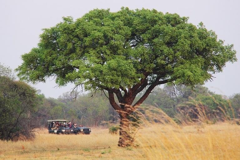 Kruger-Safari