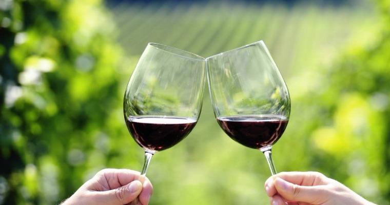 Wine Vinyard
