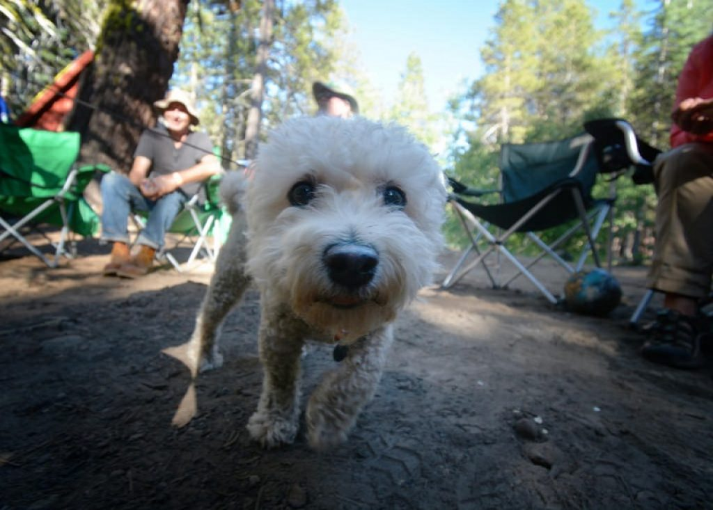 pet-friendly-camping