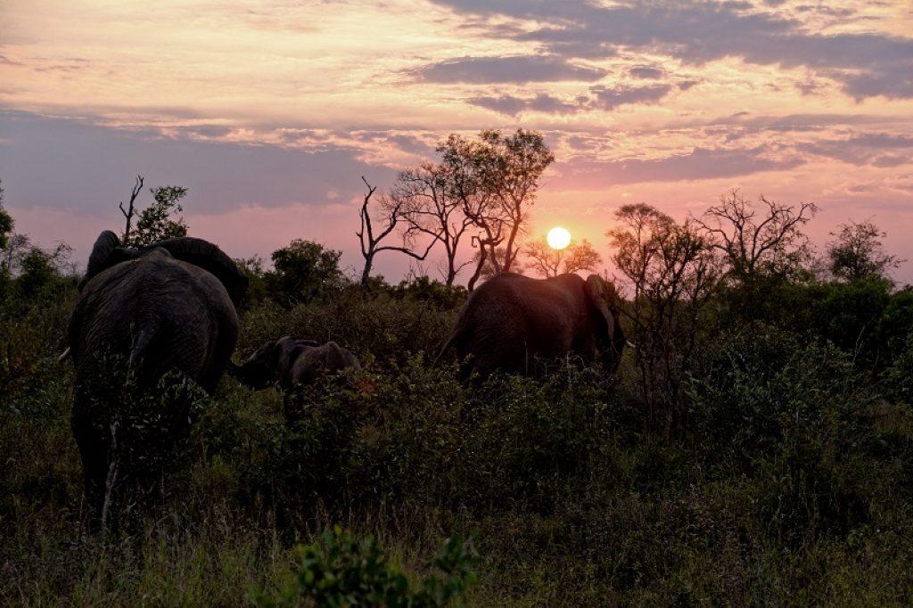 kruger-park-elephants