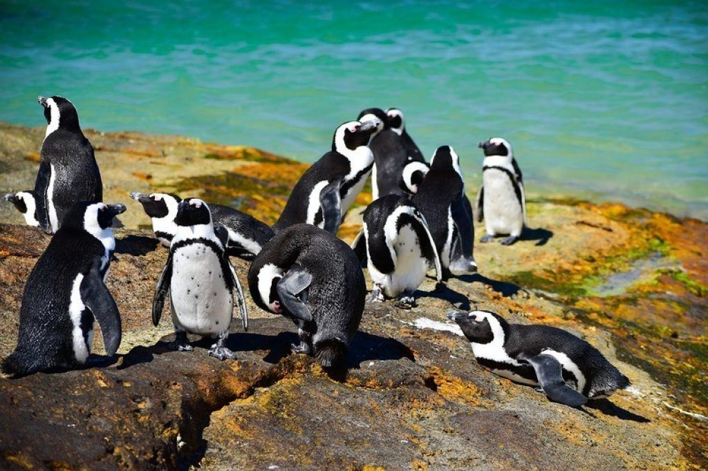 penguins-boulders-beach