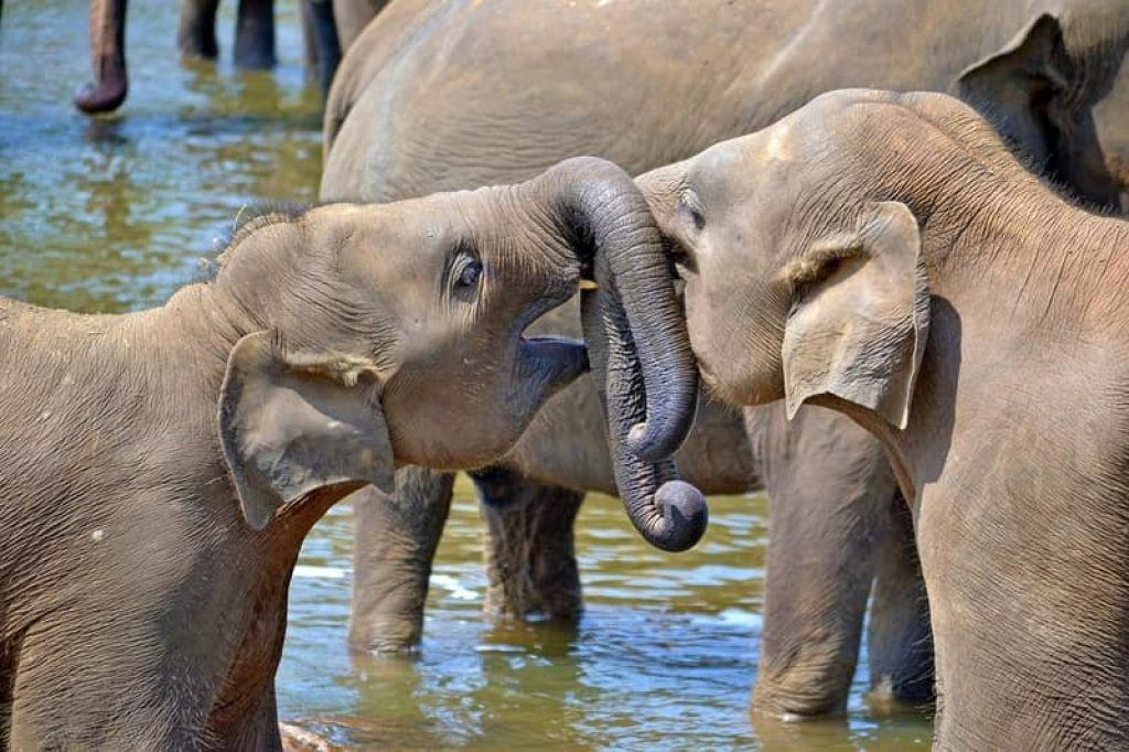 two baby elephants playing in water