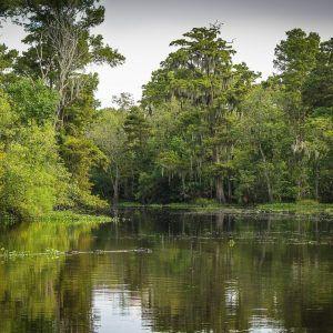 cajun-pride-swamp-tours