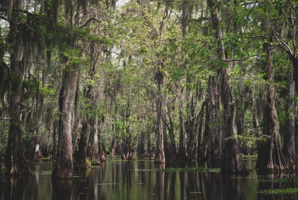 new-orleans-swamp-tours-