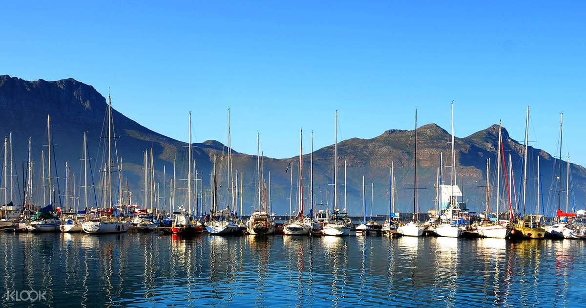 Cape Peninsula Half Day Tour