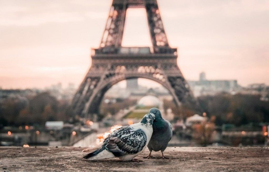 Eiffel Tower with pigeons