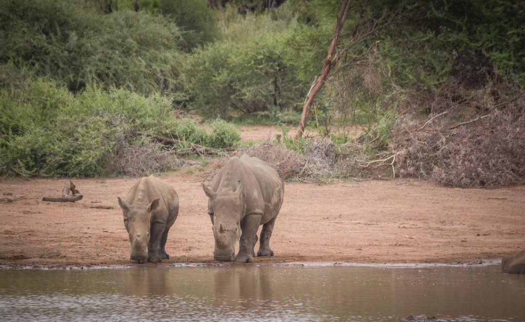 Pilansberg safari