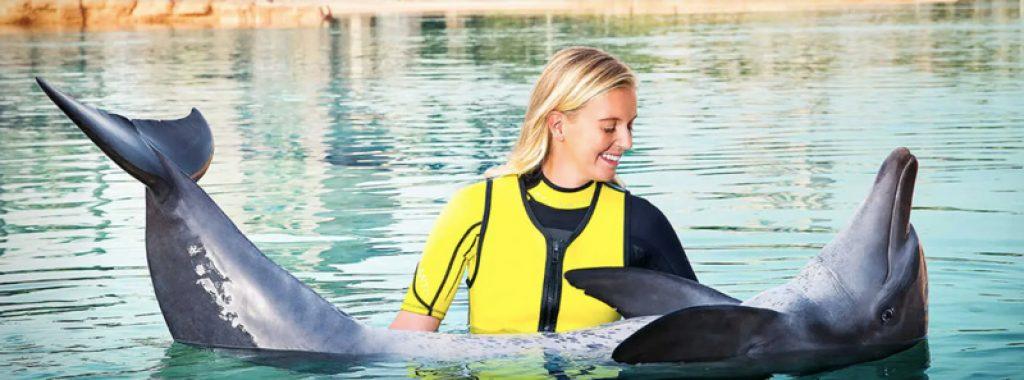 dolphin interaction in dubai