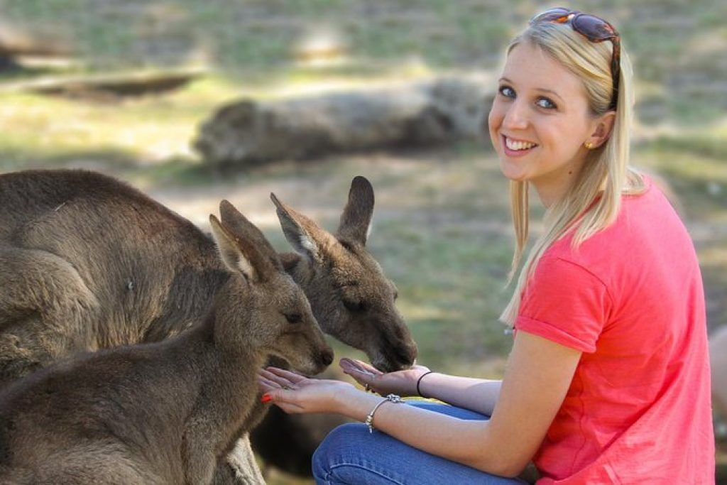 Woman handfeeding a pair of kangaroos
