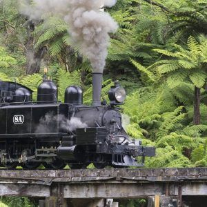 Puffing Billy cutting through the forest