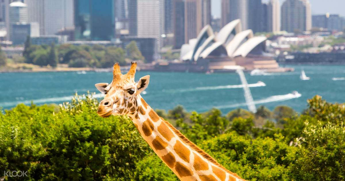 Taronga Zoo VIP Aussie Gold Tour with Cable Car Ride