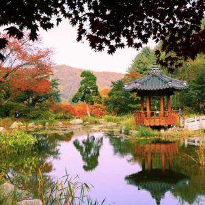 nami island garden of morning calm