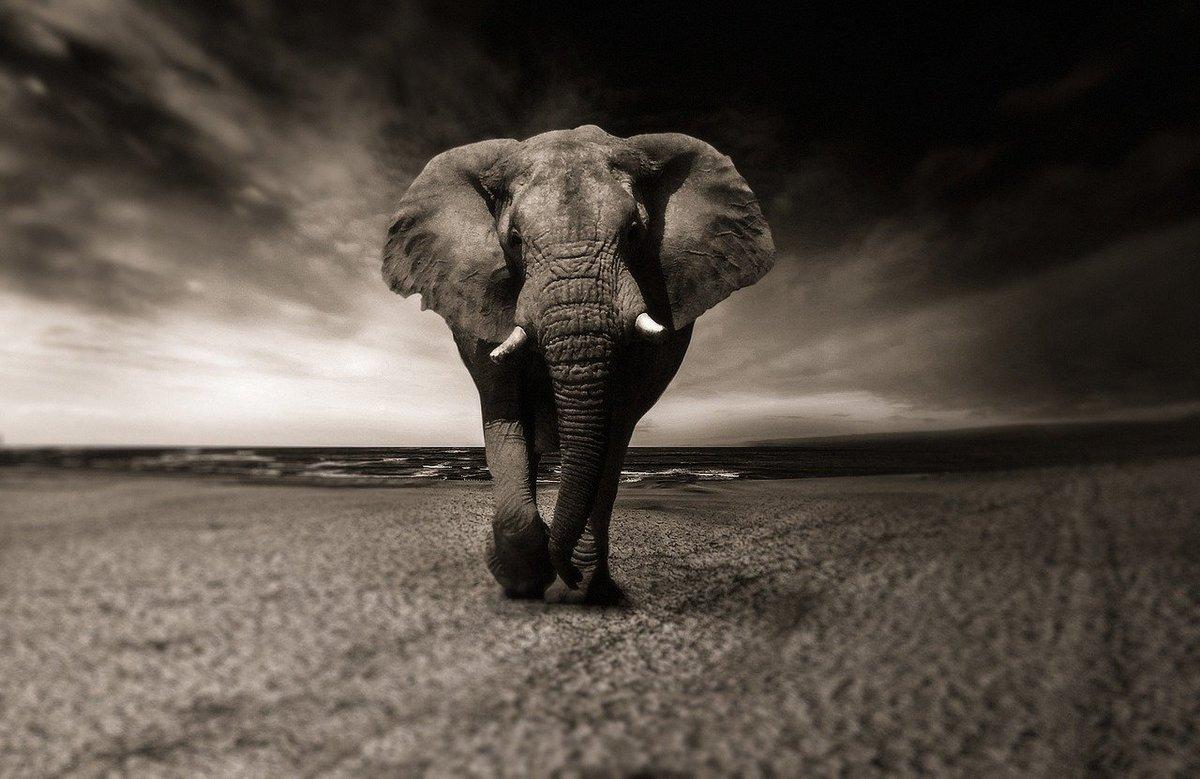 Elephant featured image