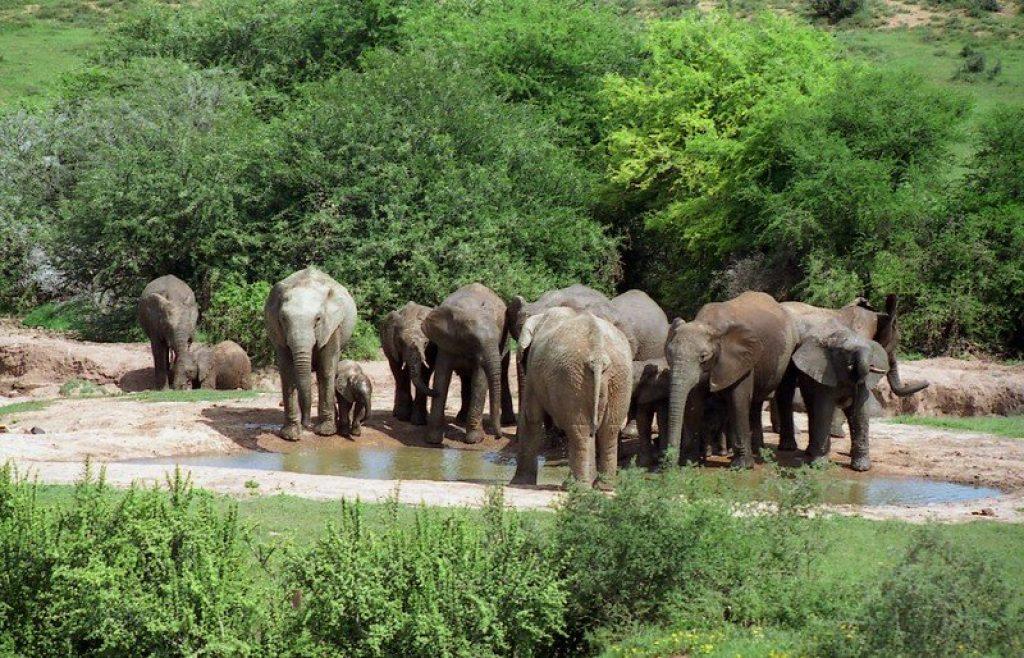 Elephants Addo Park