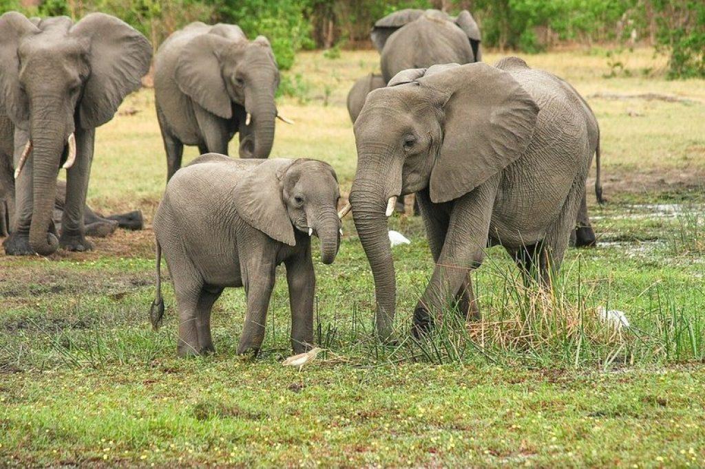 Elephant SA Game Reserve