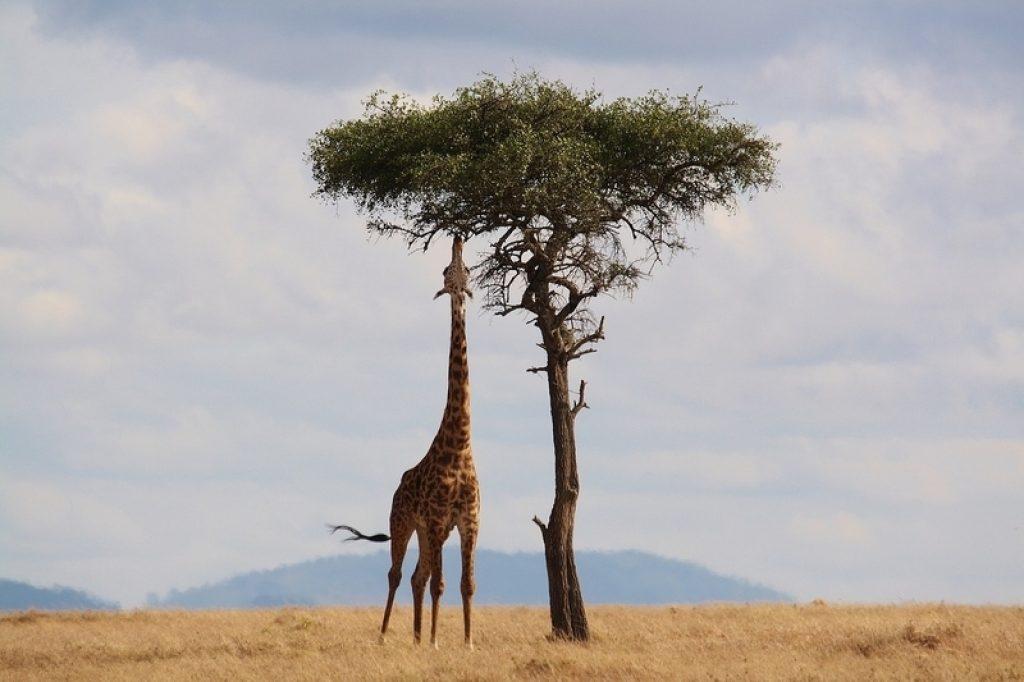 wild animal on safari