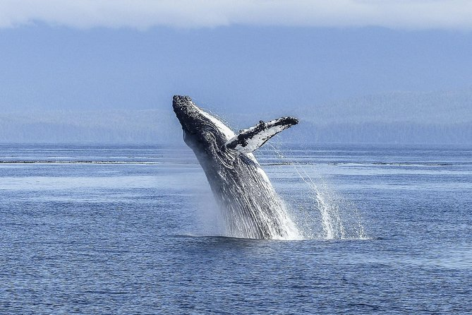 Full Day Whale Watching Tour from Cape Town