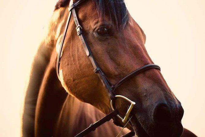 WINELANDS EQUESTRIAN ADVENTURE- HORSE RIDING & WINE