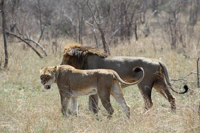4days Lukimbi Safari Lodge - Kruger National Park from Johannesberg