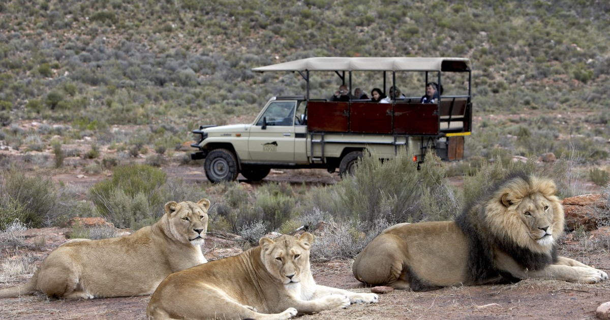 Aquila Game Reserve: Late Morning Safari with Lunch
