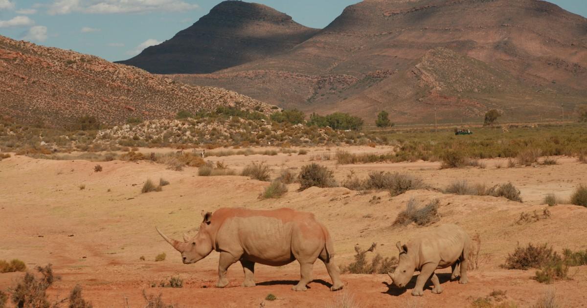 Aquila Private Game Reserve: Sunset Safari