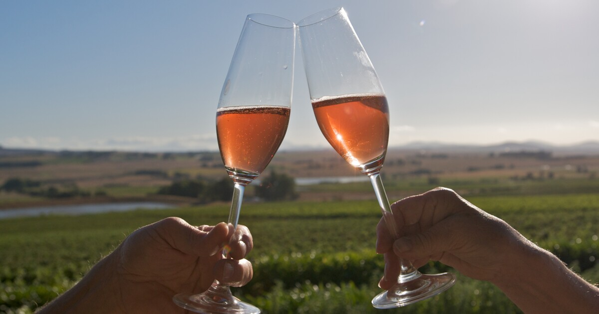 Cape Town: Full-Day Shared Wine Tasting Tour