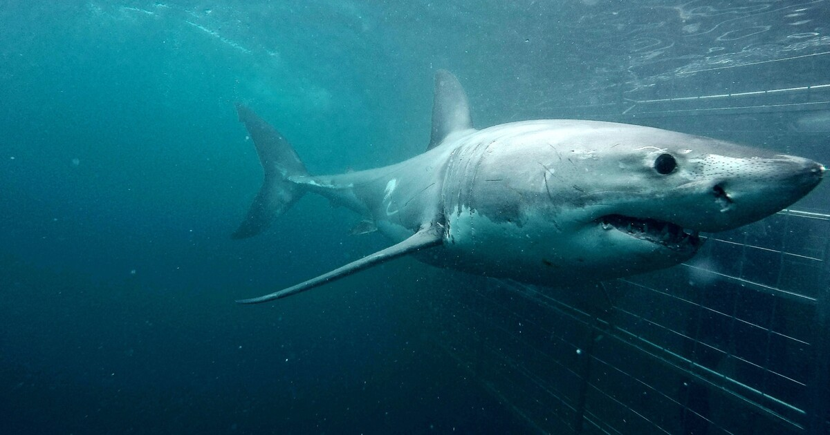 From Cape Town: Eco-Friendly Shark Cage Diving in Gansbaai