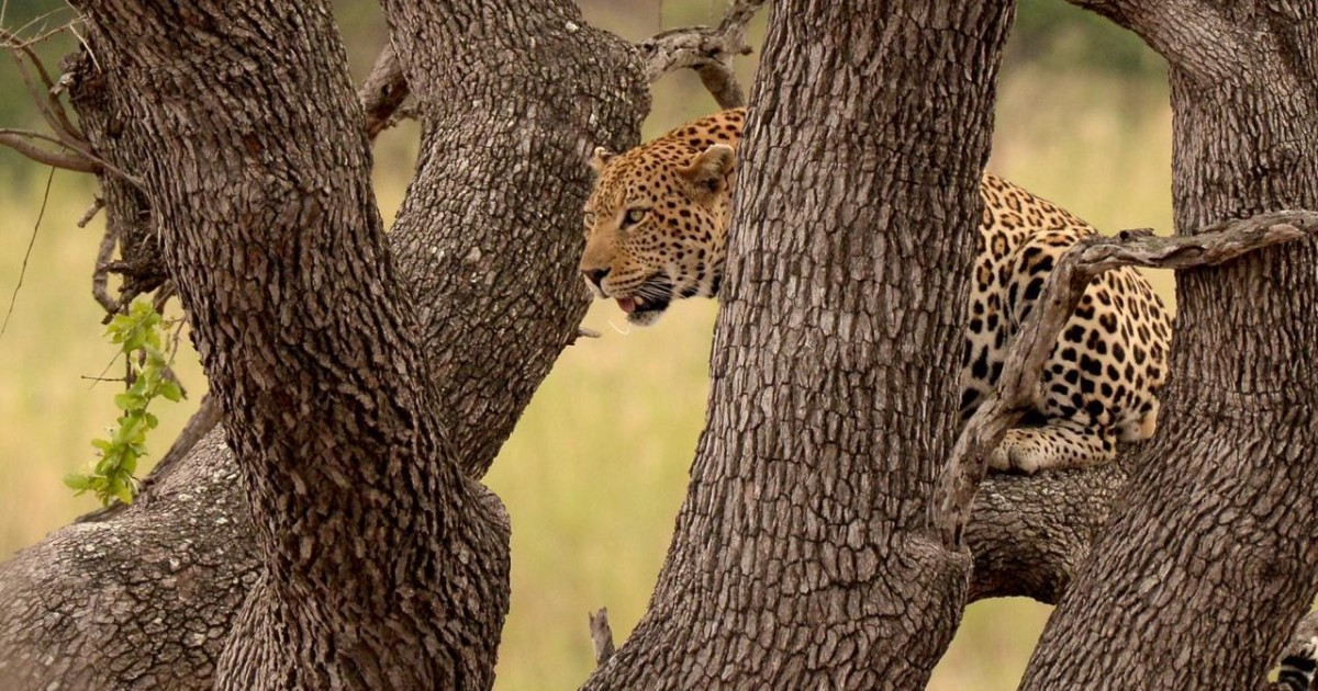 From Johannesburg: Full-Day Kruger National Park Safari