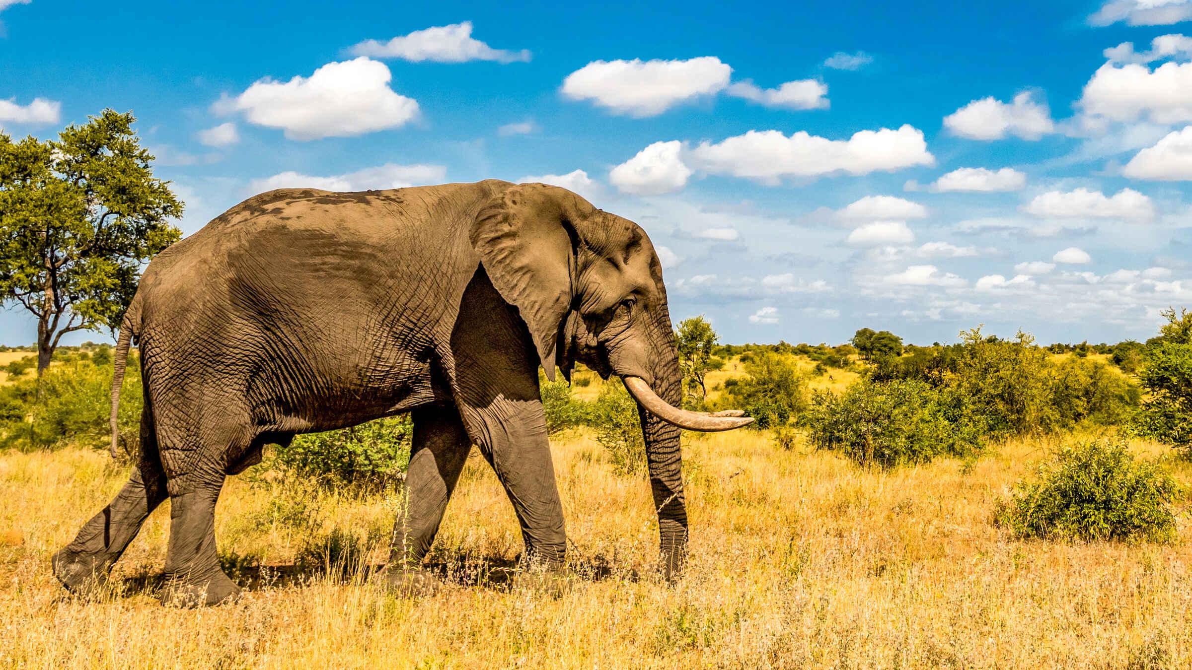 Kruger Park: 3-Day Tremisana Lodge Safari