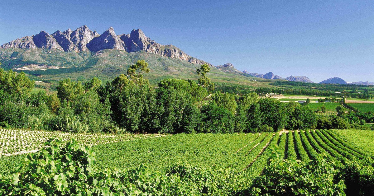 South African Winelands Full Day Tour & Tasting