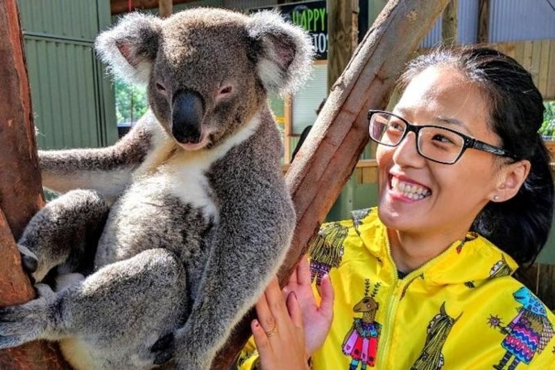 koala bears sydney australia