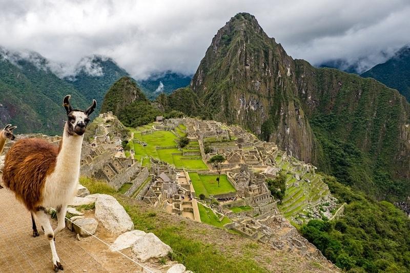 llama near Macho Picchu
