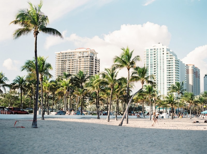 Windy Palm trees on Miami beach