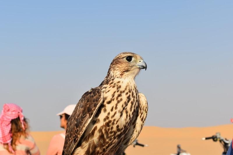 Bird in Dubai
