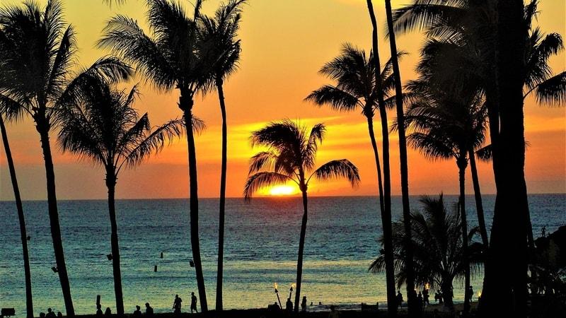 Sunset seen through palm trees on maui