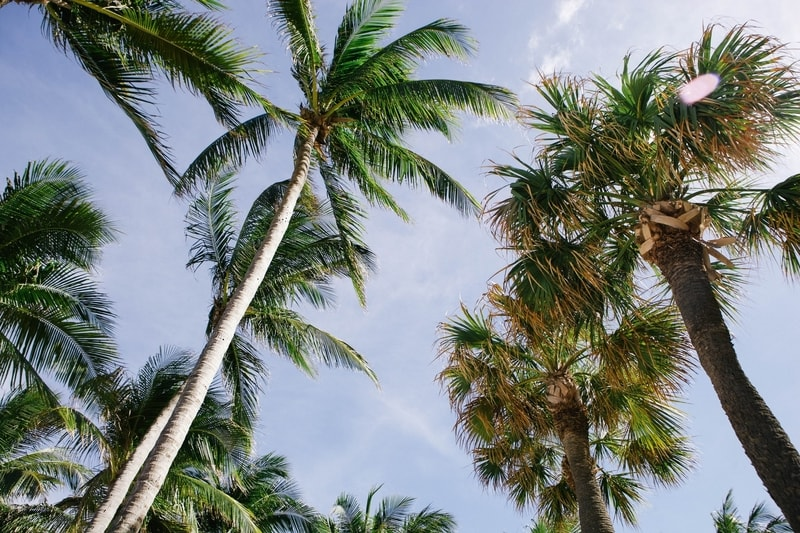 Palm trees and the sky
