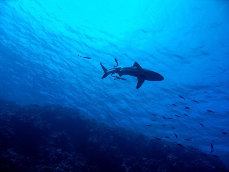 Snorkeling-GBR