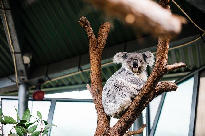 Sydney Taronga Zoo General Entry Ticket and Wild Australia Experience