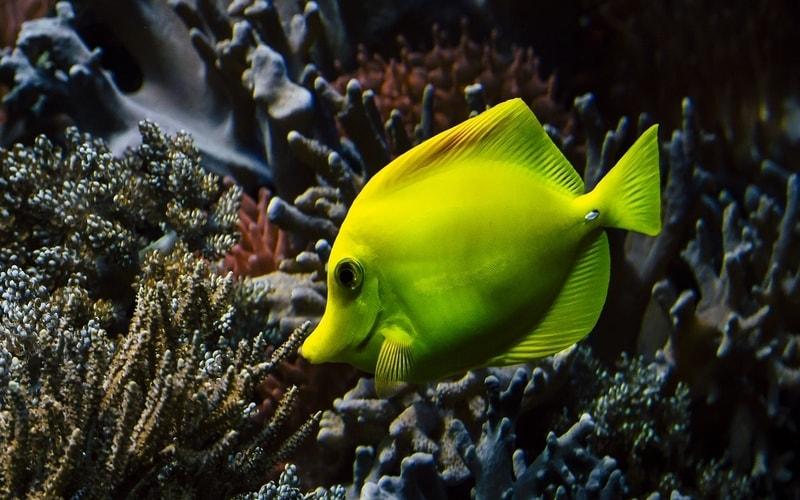 Hawaii doctor fish
