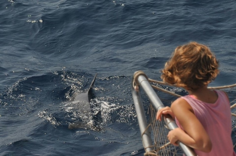 child watching dolphin in the sea on boat trip