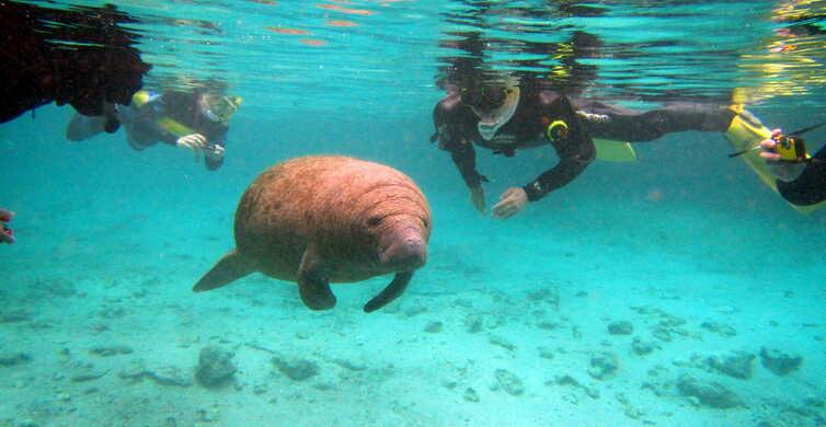 Orlando: Manatees Swim, Snorkel and Boat Day Tour