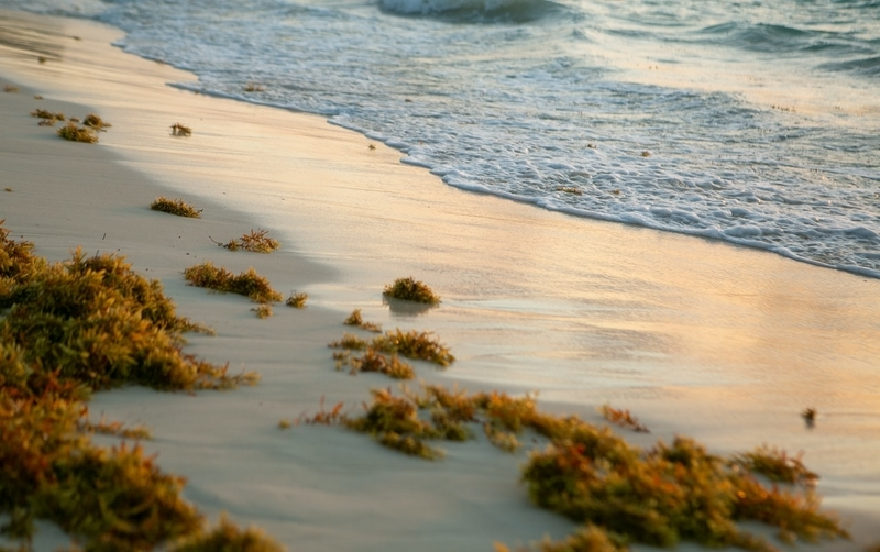 Shoreline on the sand
