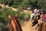 2 Hour Horse Trail with Dinner
