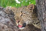 3 day Authentic Kruger Park Experience
